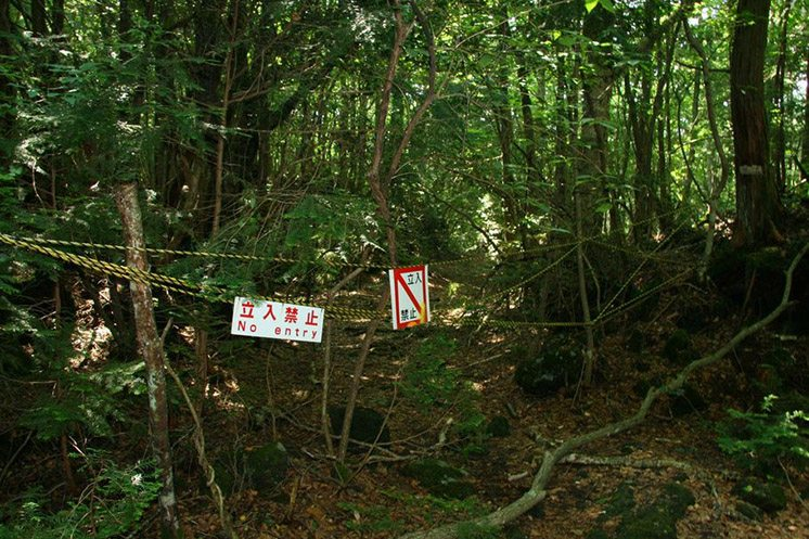 aokigahara-suicide-forest-japan