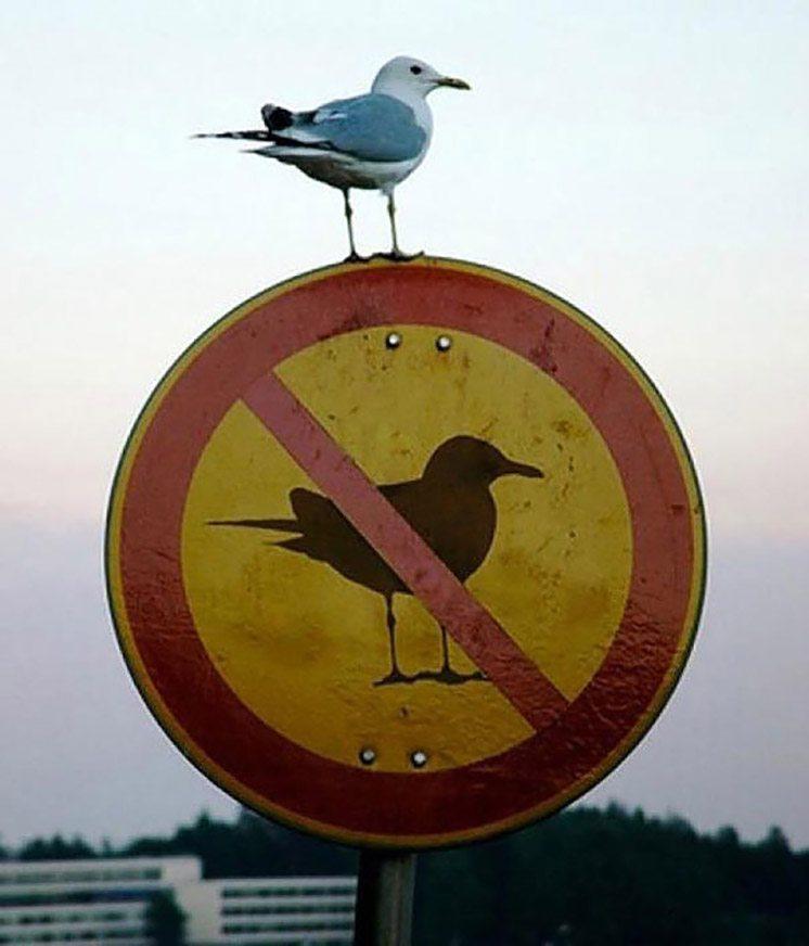 20-a-bird-perched-on-a-no-bird-sign