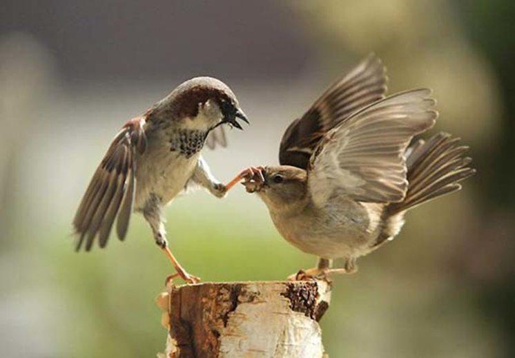 43-bird-fight