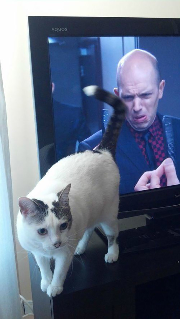 45-a-cat-and-a-man-on-screen