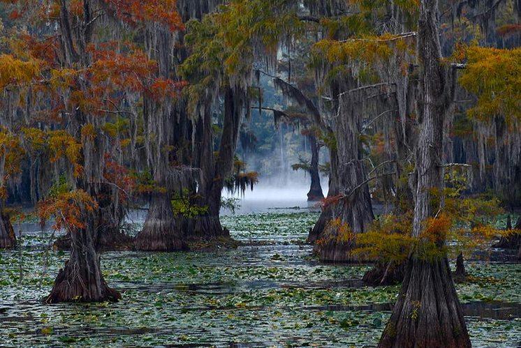caddo-lake-texas