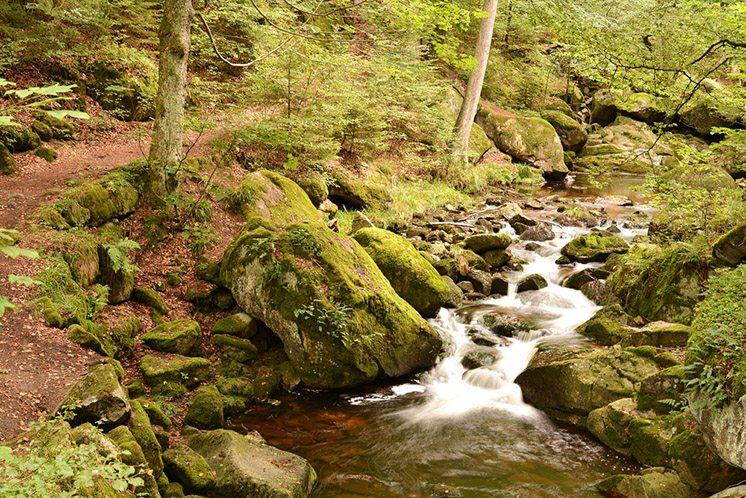 harz-national-park-germany