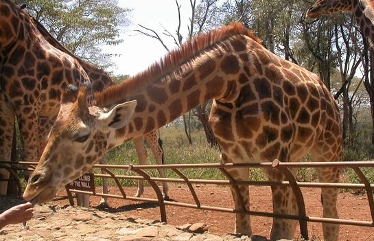 20 Tourist Attractions in Kenya